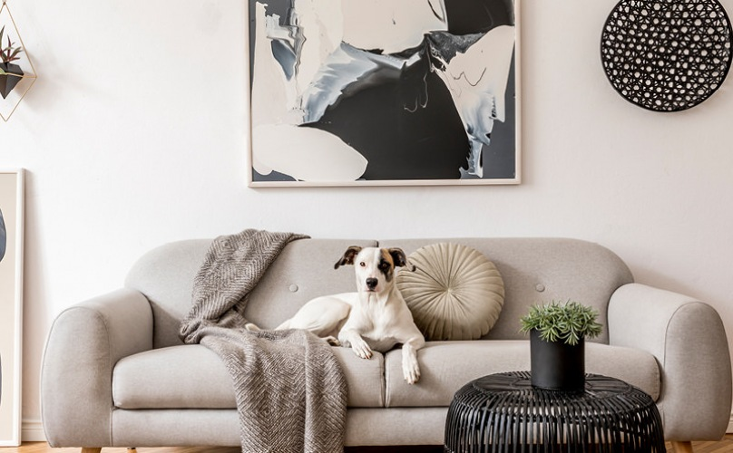 dog on a couch in furnished living room